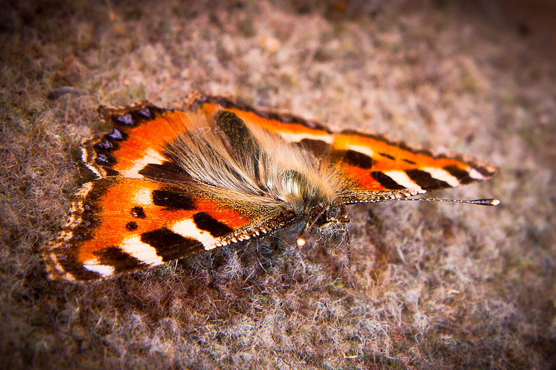 Name:  moth-7032-Edit.jpg Views: 79 Size:  170.8 KB