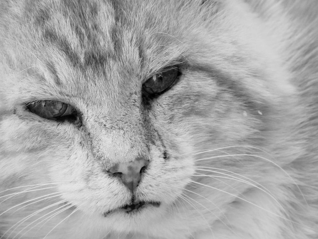 Name:  cat-headshot.jpg Views: 62 Size:  124.4 KB