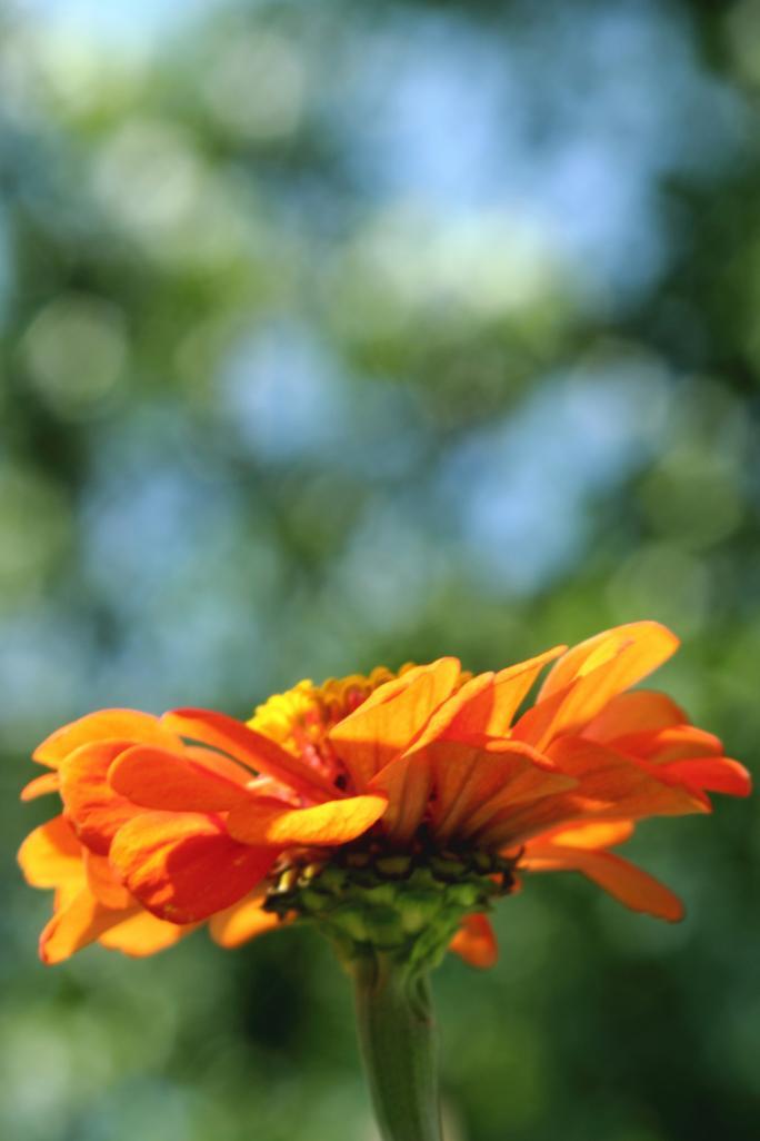 Name:  flower1.jpg Views: 64 Size:  44.9 KB