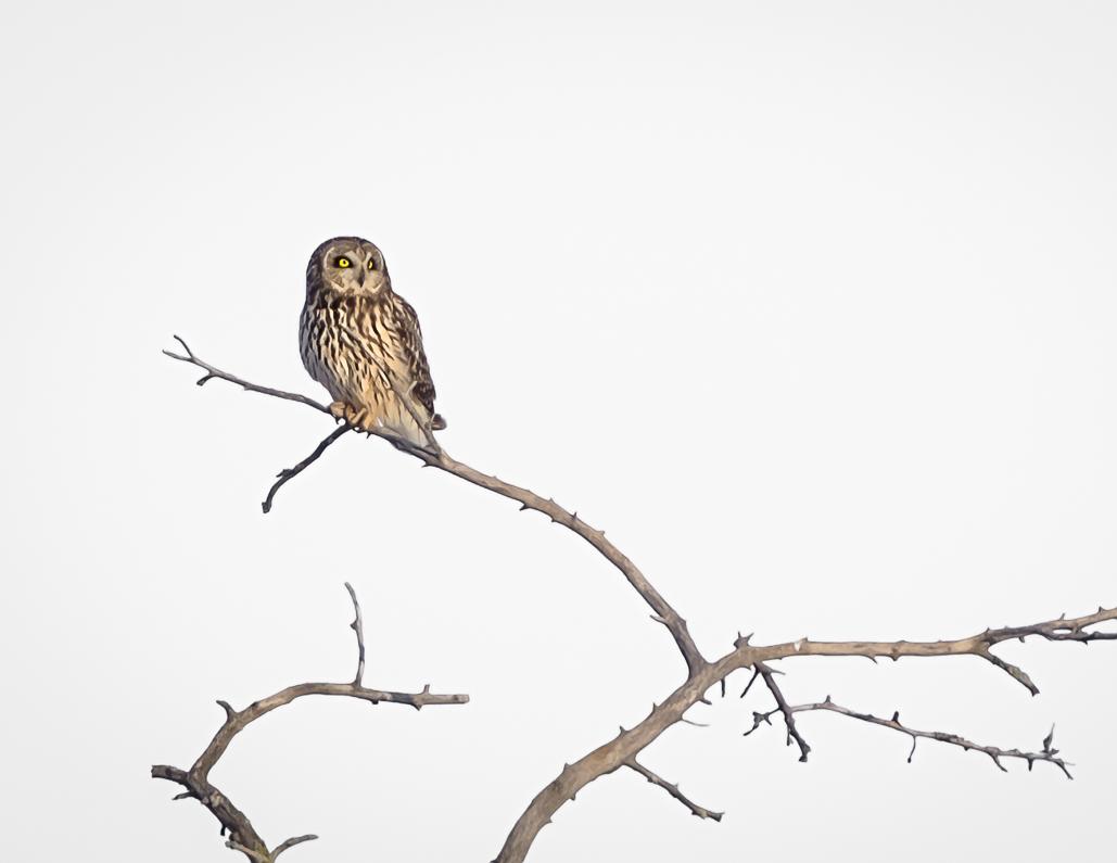 Name:  Owl2.jpg Views: 104 Size:  199.6 KB