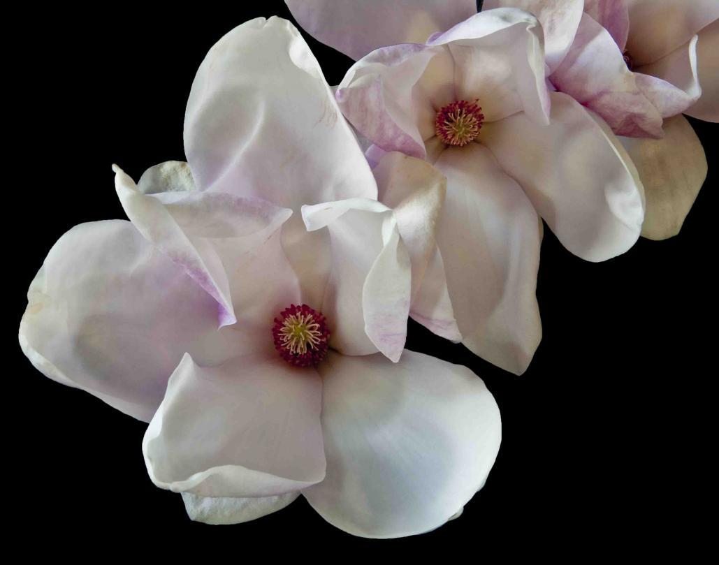 Name:  Magnolia branch,f22, one sec.  .jpg Views: 49 Size:  53.1 KB