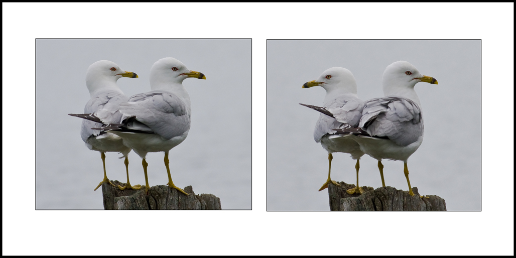 Name:  Diptych .jpg