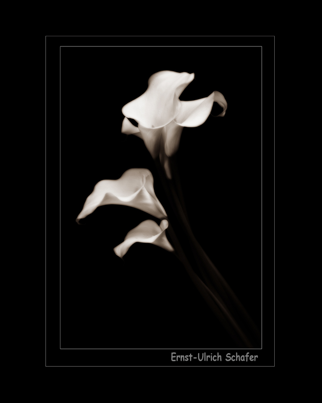 Name:  15555d1341186581-calla-lily-dance-img_4579-bwt-16xframed.jpg