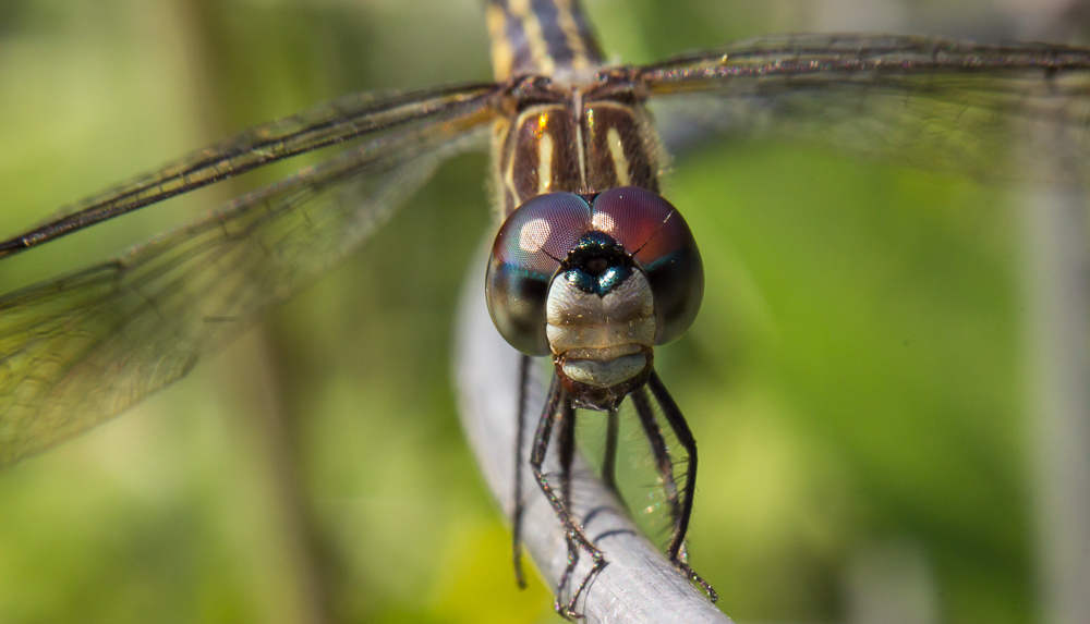Name:  19461d1409276023-dragonfly-wire-img_5587.jpg