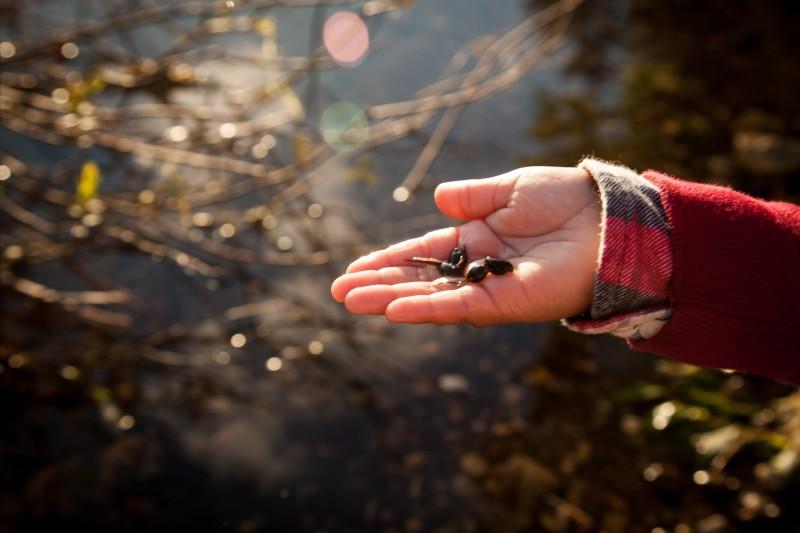Name:  tadpoles.jpg Views: 31 Size:  69.2 KB