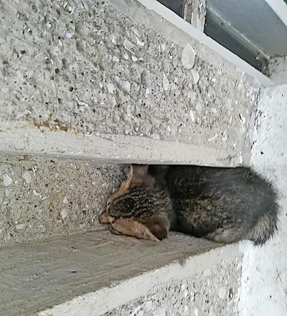 Name:  cat.jpg Views: 47 Size:  75.6 KB