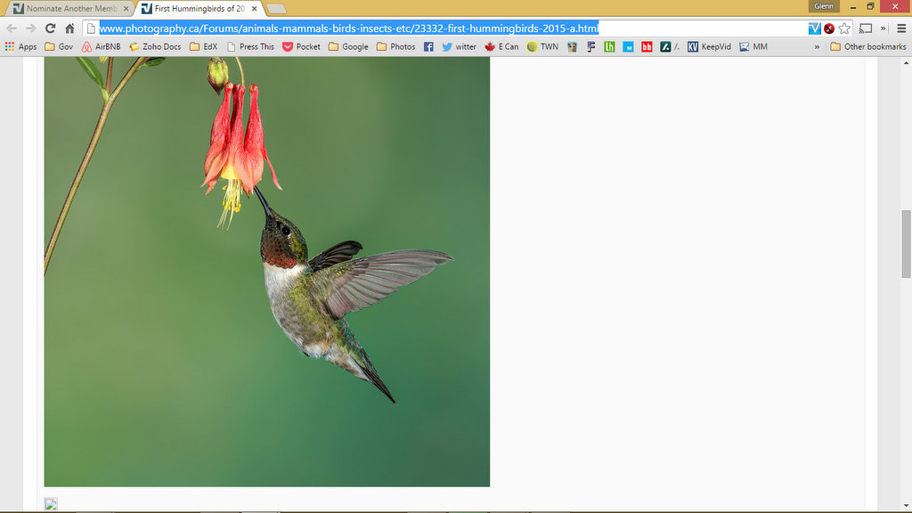Name:  First Hummingbirds of 2015 - Google Chrome 2015-06-24 93713 PM.jpg