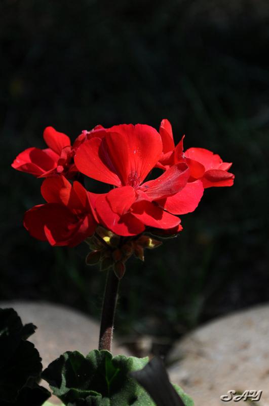 Name:  Flowers 11.jpg Views: 55 Size:  169.3 KB
