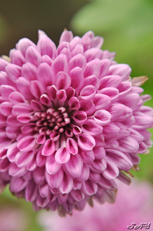 Name:  Flower 6.jpg