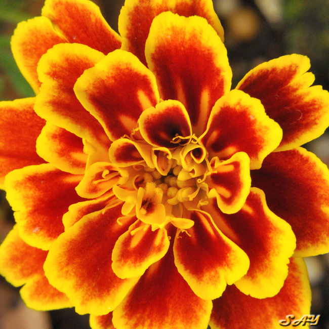 Name:  Flower 8a.jpg