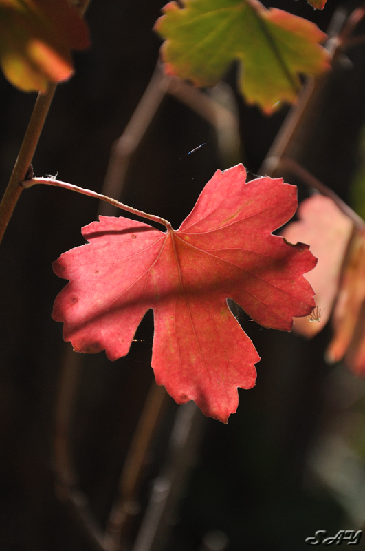 Name:  Leaf 1.jpg Views: 93 Size:  187.1 KB