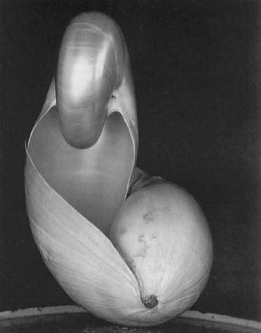Shell by Edward Weston - 1927