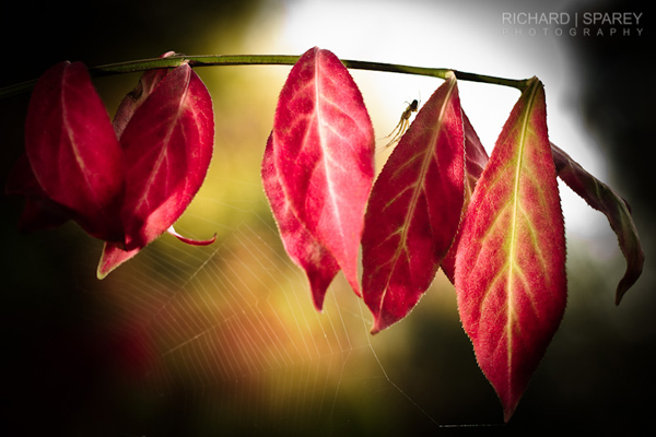 Autumn Web by Richard