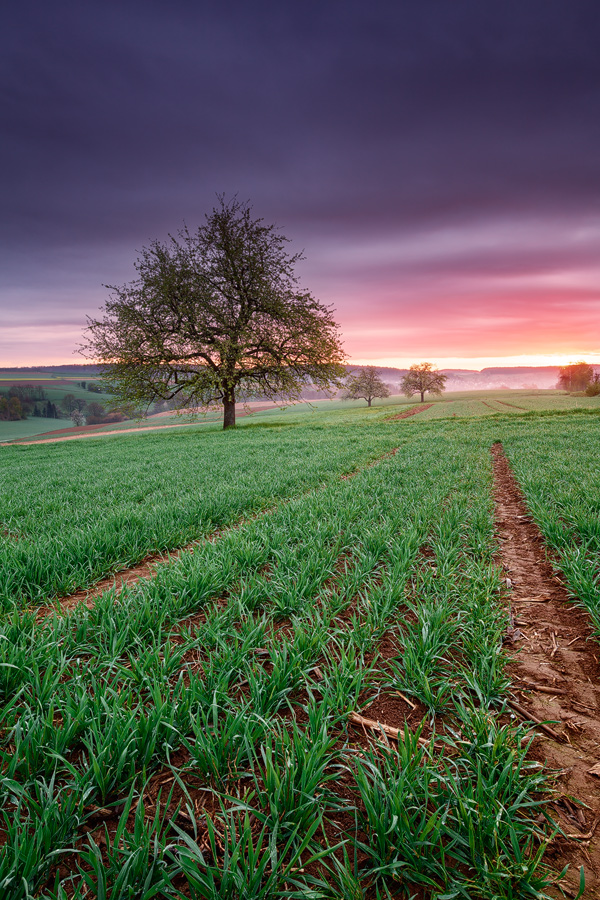 Kraichgau at Dawn - Focus stacked photograph by Michael Breitung