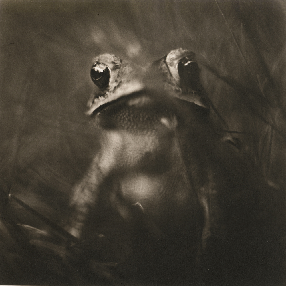 Toad by David Johndrow
