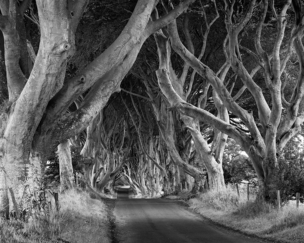 The Dark Hedges, Antrim, Northern Ireland, 2011 by Bret Culp