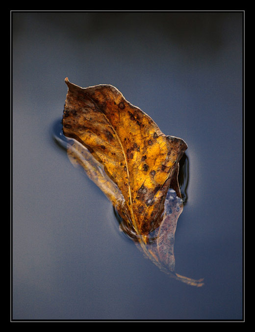 A leaf in water by Michaelaw