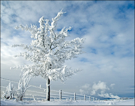 NMP9850 - Cochrane, Alberta - Frosted tree, fence and field near Cochrane, Alberta