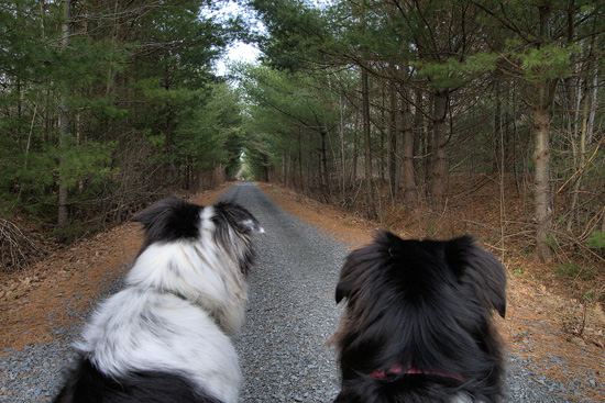 The Dogs view of the trail by Bambi - Click to enlarge
