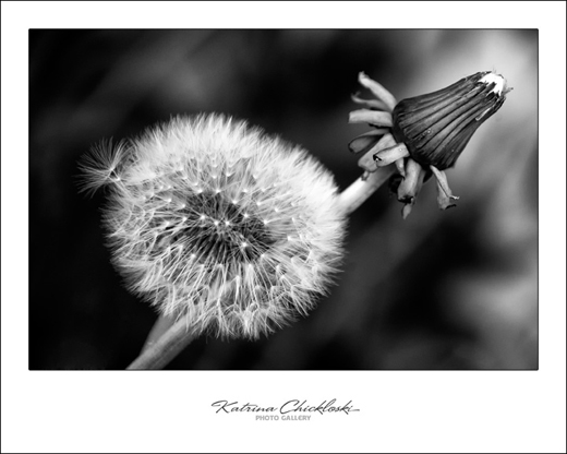 Colorless Beauty by Kat - Click to enlarge